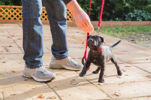 Tips on leash training